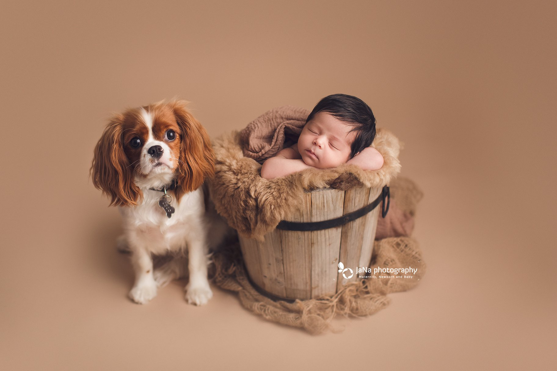 newborn photography with dog - brown setup