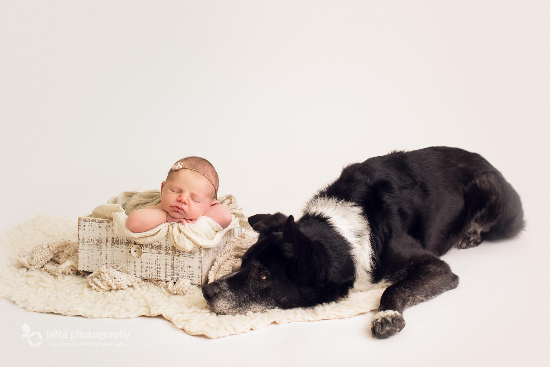 Vancouver newborn photography Magnolia and dog