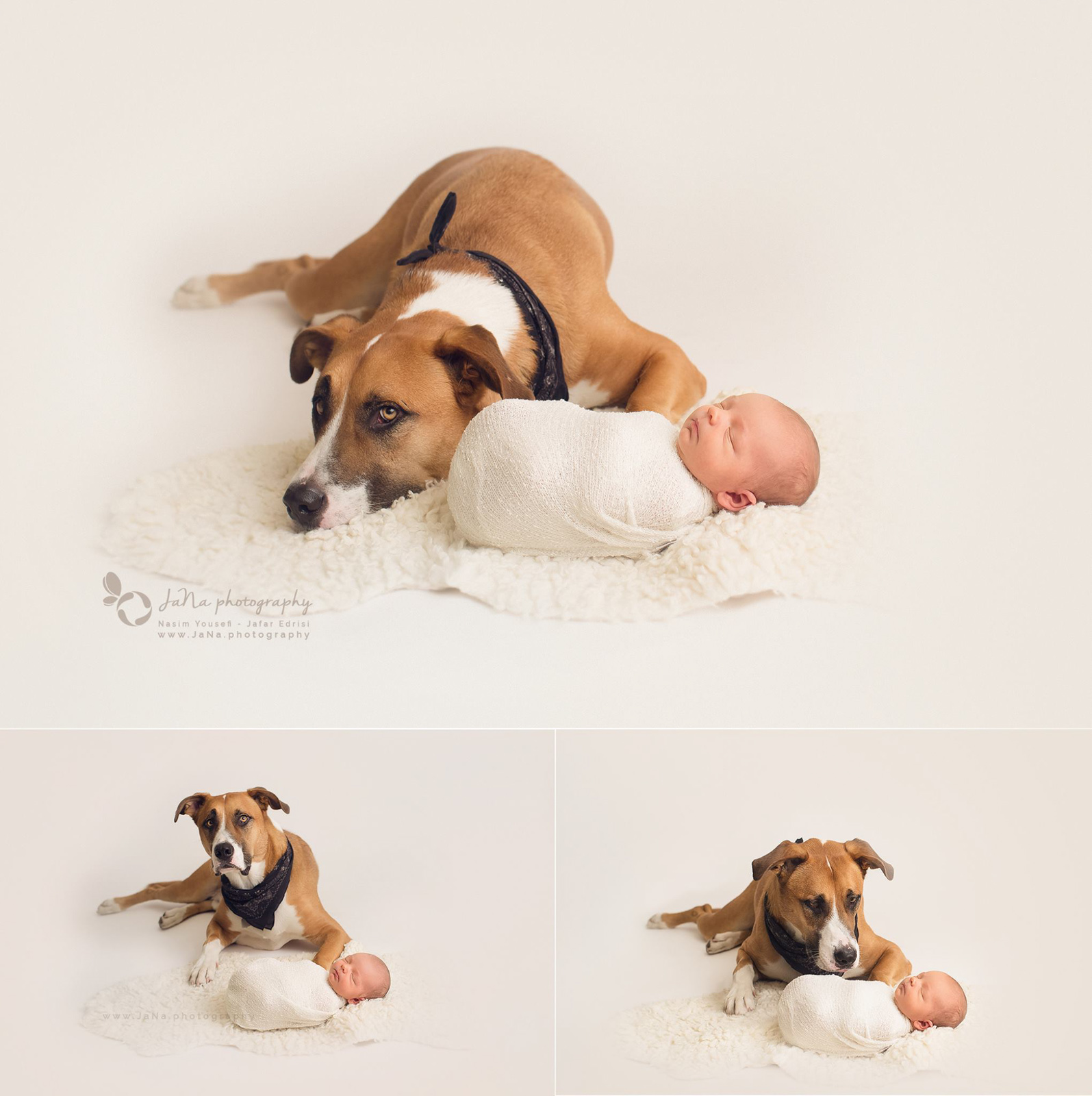 newborn baby boy with a big dog | Jana Vancouver bc