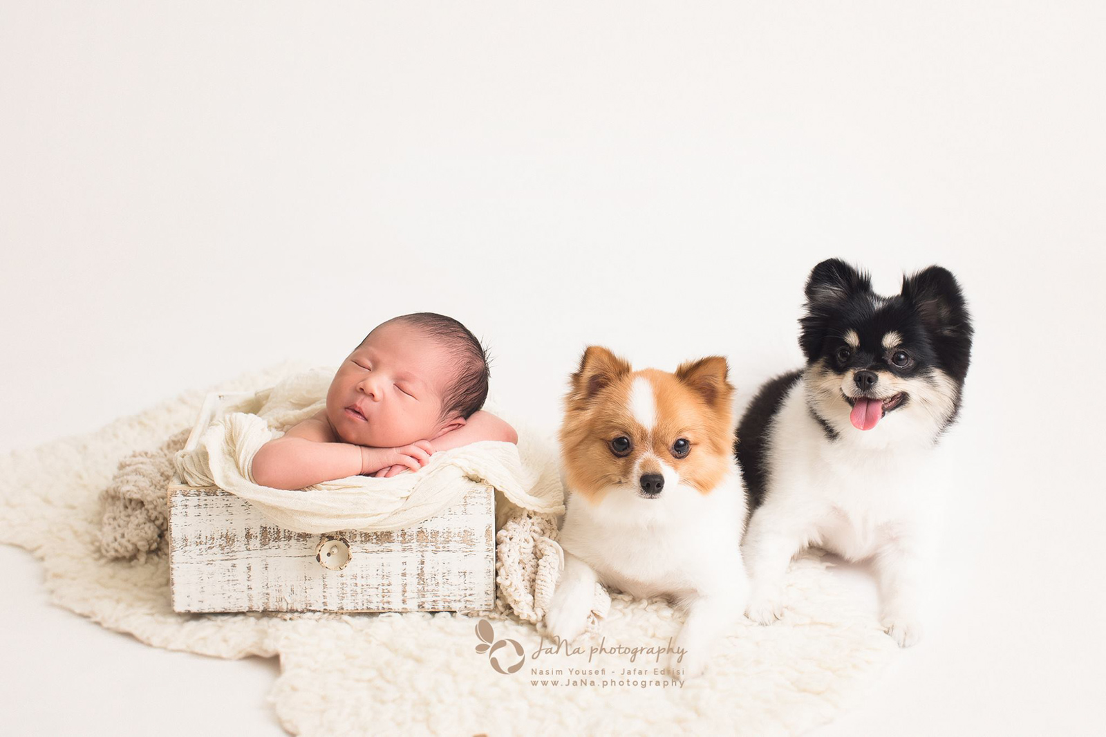newborn baby boy with 2 dogs in a white background