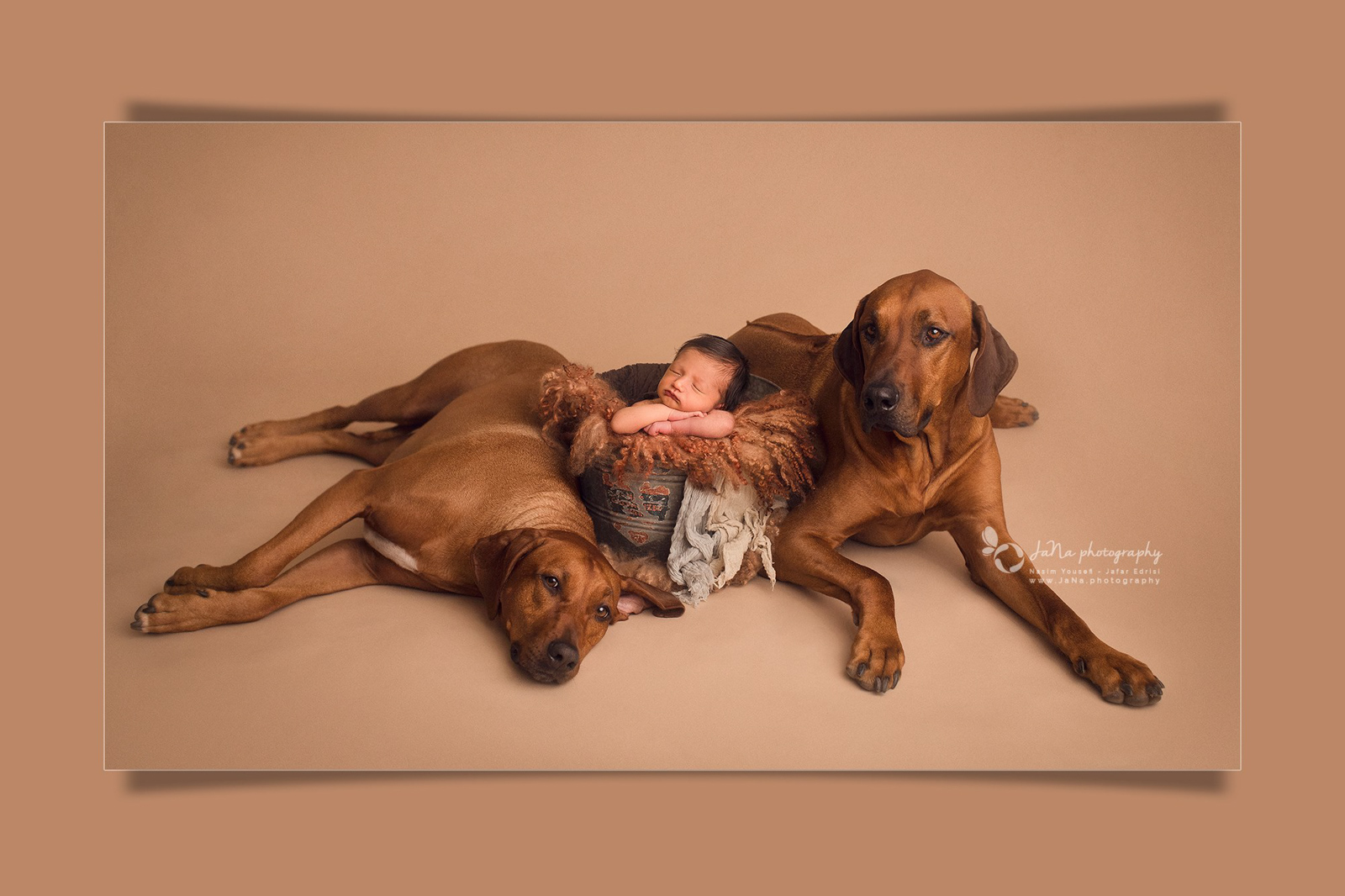 vancouver newborn photography with 2 dogs in a brown setup