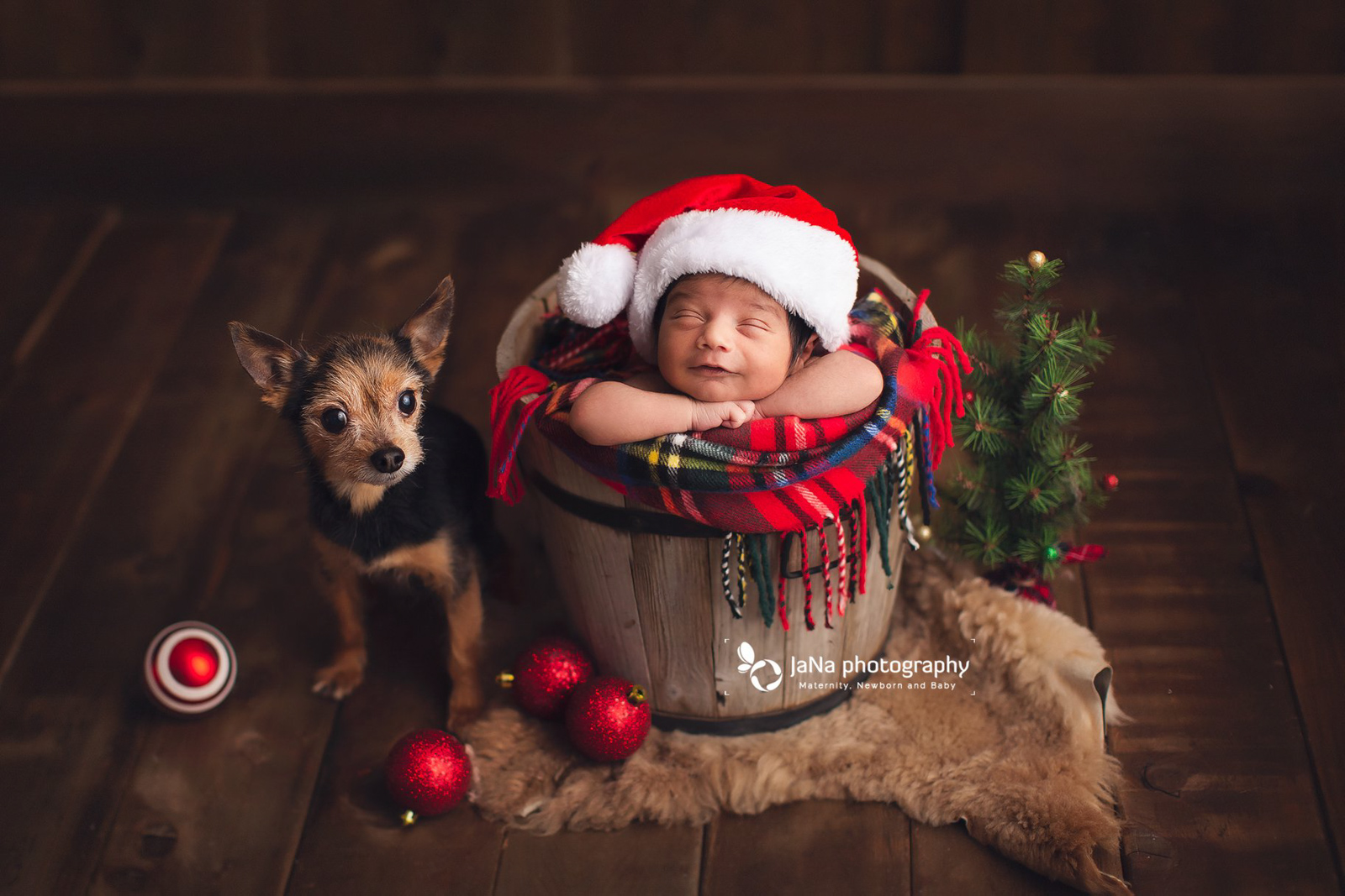 christmas setup with a small black dog and newborn baby boy