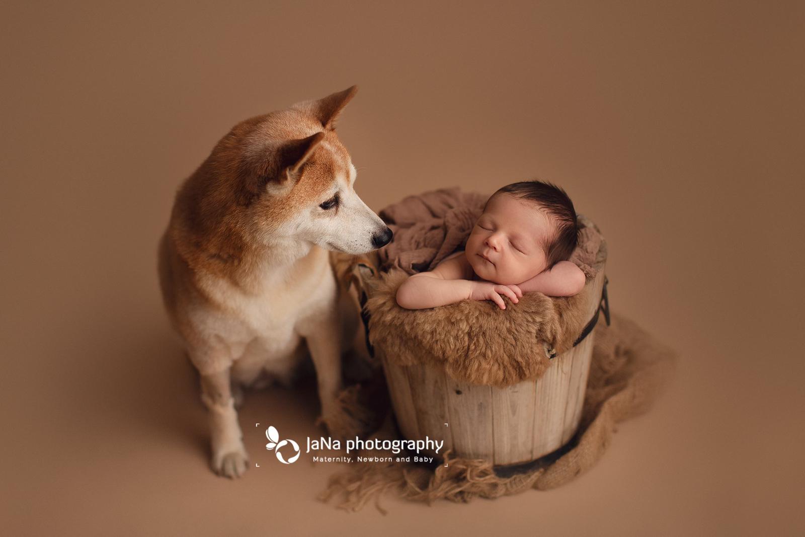 Vancouver-newborn-photography-dog-7