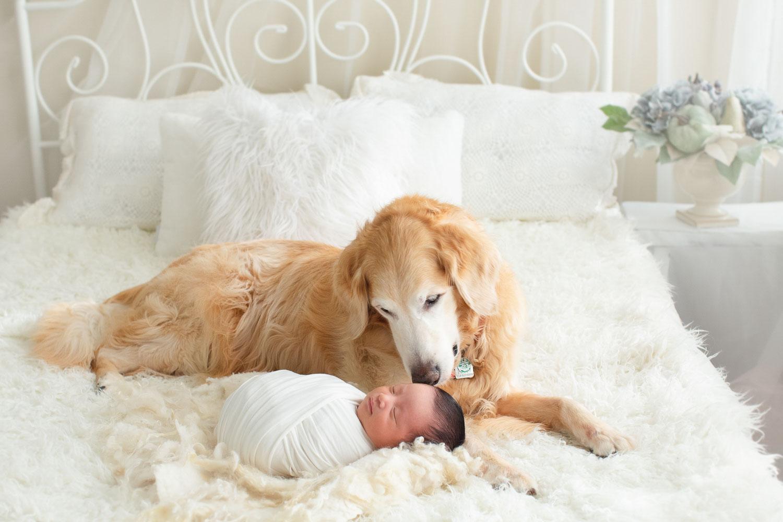 newborn baby boy and a dog | jana newborn photography