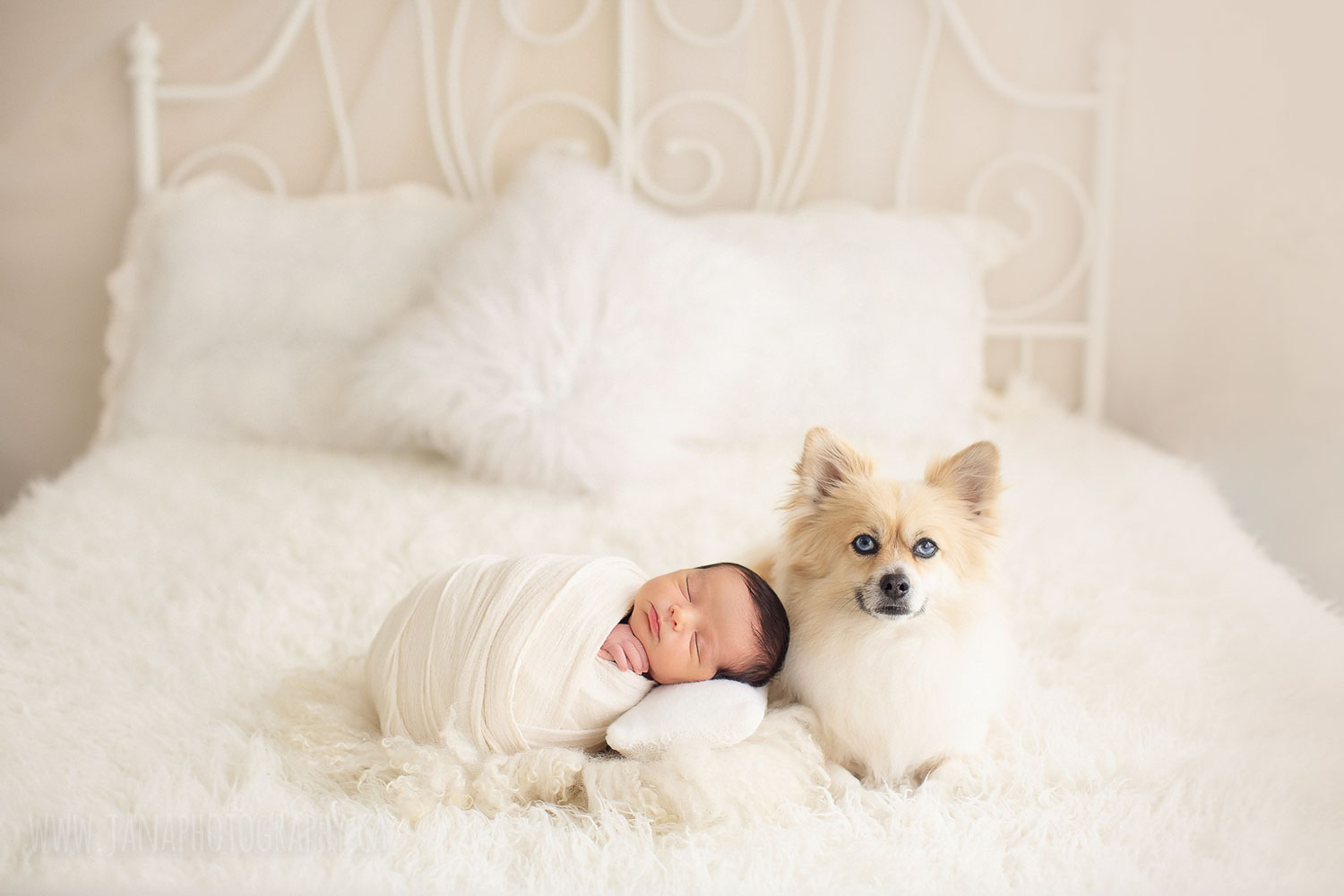 newborn baby boy with dog - natural light - white bedroom