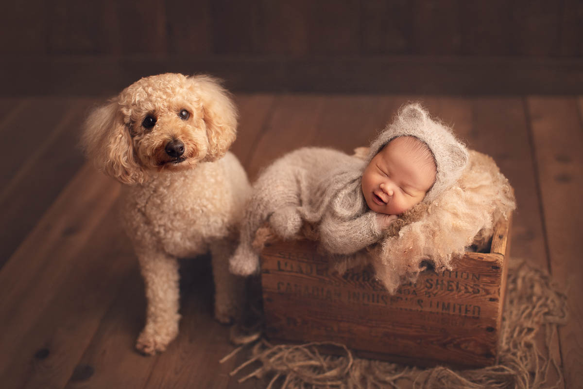 Goldendoodle dog and newborn baby boy in brown bed setup